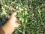vendo finca de olivos en Mendoza