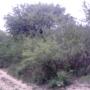 351 Hectareas de campo en SANTIAGO DEL ESTERO LA BANDA , con escritura