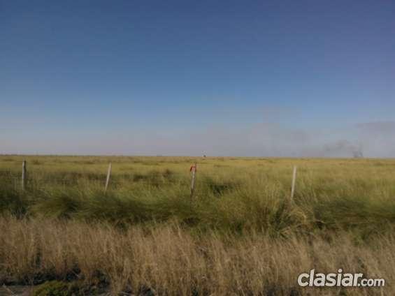 ¡¡¡ campo ganadero sur de santiago del estero-zona de selva !!!