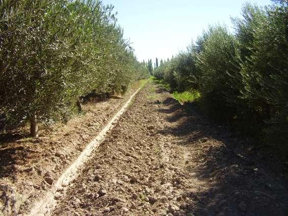 Chacra ideall alfalfa 180 hta lavalle