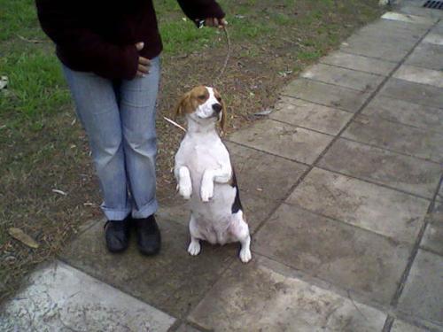Adiestramiento canino desde 1962