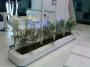Alquiler de Plantas para exposiciones y