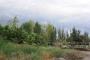 Vendo Parcela de 1,5ha en Km 8 , Guaymallen - terrenos arbolados vendo - Mendoza