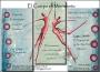 Clases de Danza Contemporánea y Entrenamiento Corporal