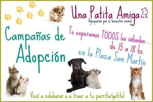 Campañas de adopción de perros y gatos