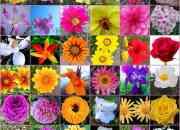 Cosmetica con aromaterapia linea garden angels