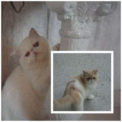 Fotos de Traslado de mascotas transpato 01142696618 3