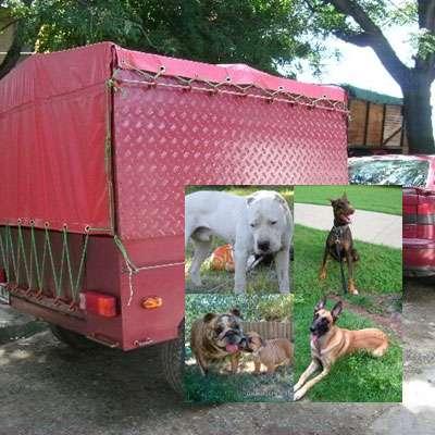 Traslado de mascotas transpato 01142696618