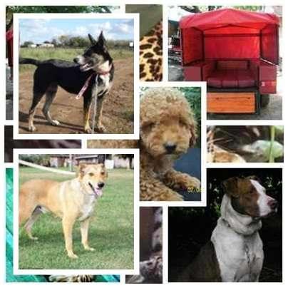 Fotos de Traslado de mascotas transpato 01142696618 5