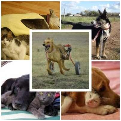 Fotos de Traslado de mascotas transpato 01142696618 7