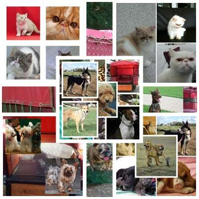 Fotos de Traslado de mascotas transpato 01142696618 8
