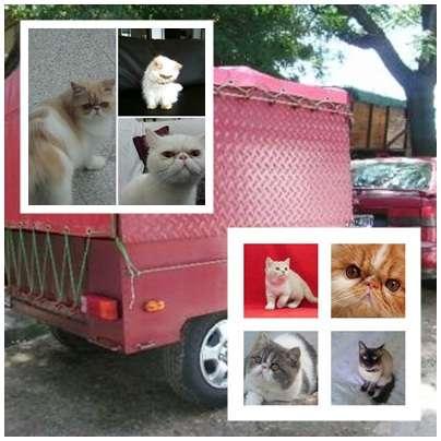 Fotos de Traslado de mascotas transpato 01142696618 6