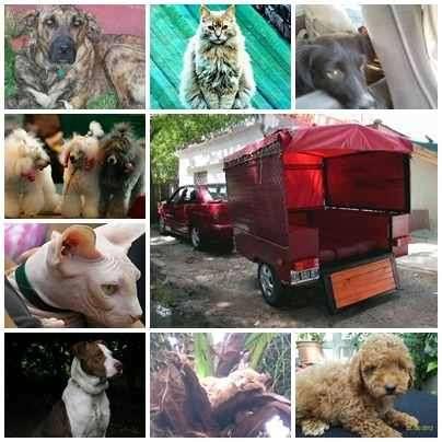 Fotos de Traslado de mascotas transpato 01142696618 2