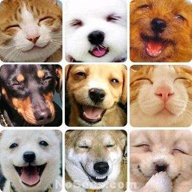 Traslado de mascotas al interior.(011) 15-3615-9200