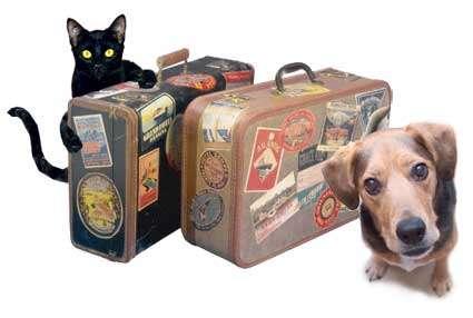 Fotos de Traslado de mascotas transpato 01142696618 9