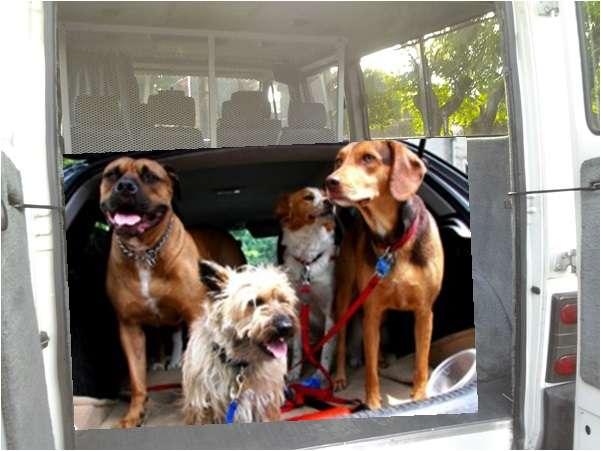 Fotos de Traslado de mascotas transpato 01142696618 11