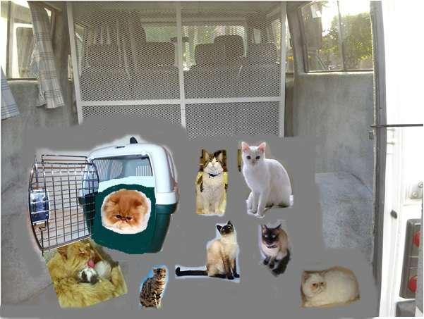 Fotos de Traslado de mascotas transpato 01142696618 12