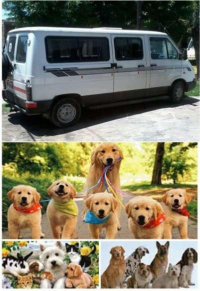 Fotos de Traslado de mascotas transpato 01142696618 10