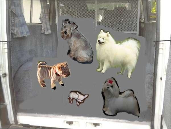 Fotos de Traslado de mascotas transpato 01142696618 14