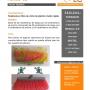 Escoba de plástico económica tipo cepillo Perico CE  Realizada en fibra de vinilo de plást
