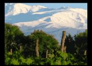 Bodegas de vinos en estado de mendoza en vta.
