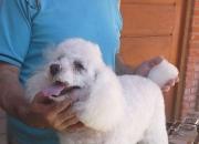 Estilista canino en Zona Sur del Gran Buenos Aires