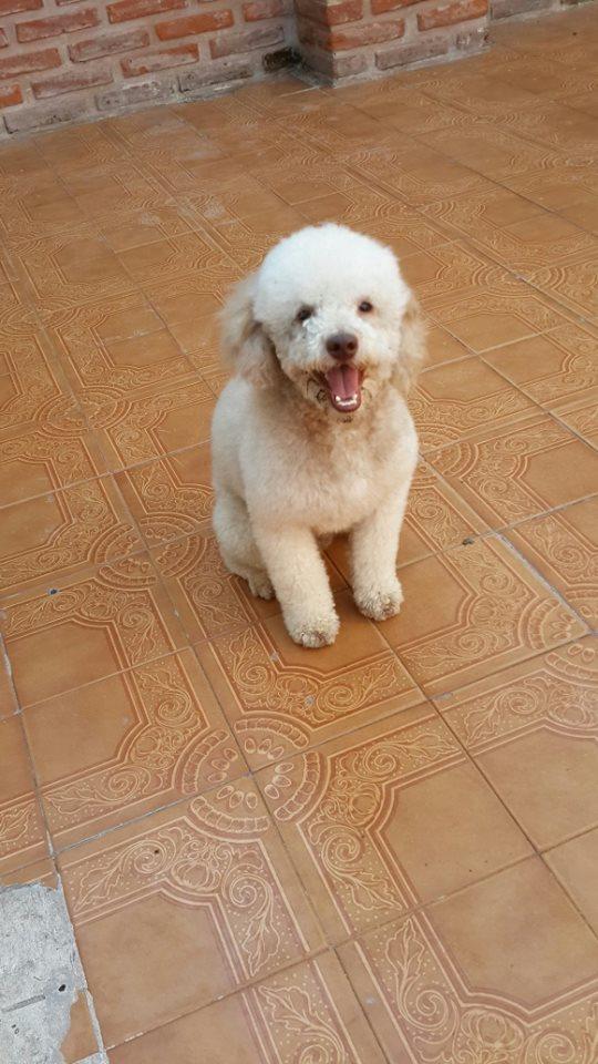 Fotos de Peluqueria canina en lomas de zamora 3