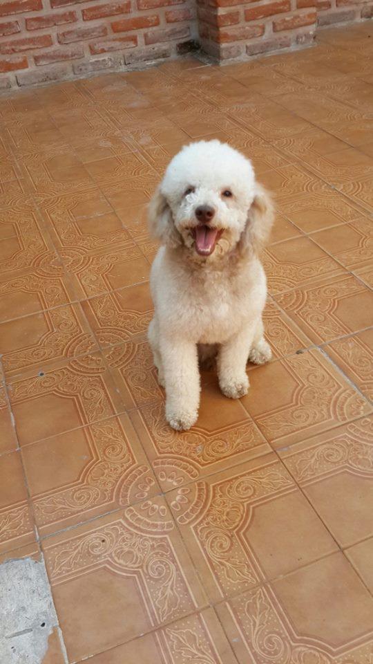 Fotos de Peluqueria canina en lomas de zamora 4