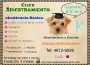 Click Adiestramiento Canino a Domicilio Cap. Fed.