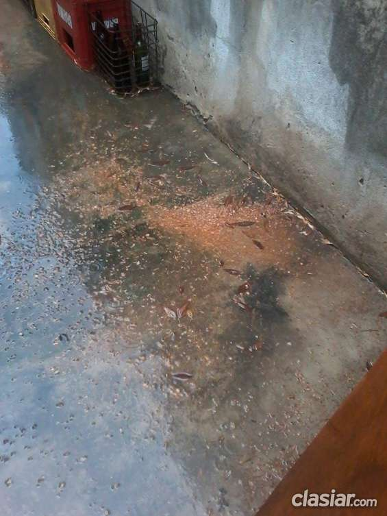 Contaminacion de carpinteria