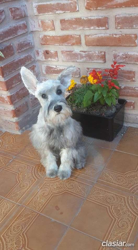 Fotos de Peluqueria canina en lomas de zamora , zona sur del gran buenos aires 4